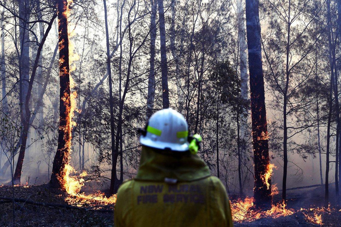 直到12月27日為止,全澳洲共有500萬公頃的林地被燒成灰燼(1.5個台灣);其...