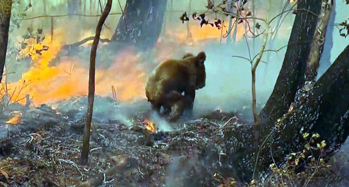 澳洲環境部長蘇珊.萊(Sussan Ley)27日表示,當前大火失控的重災區、作...
