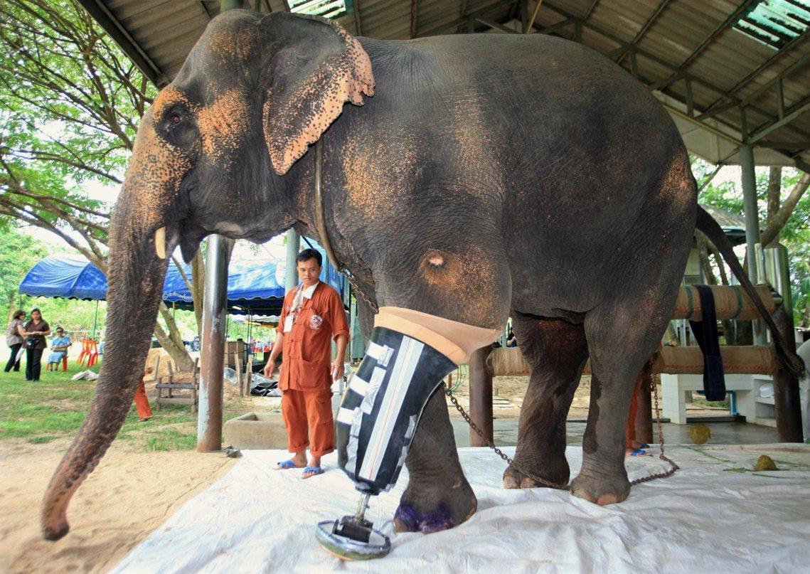 假冒成庇護所,實則變相靠著馴象牟利的大有所在;但泰國事實上也有許多救援、收容大象...