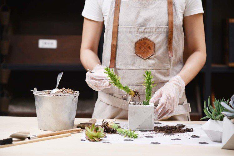 情人節手作體驗 – 泥作盆器植栽(圖/有肉 Succulent & Gift提供...