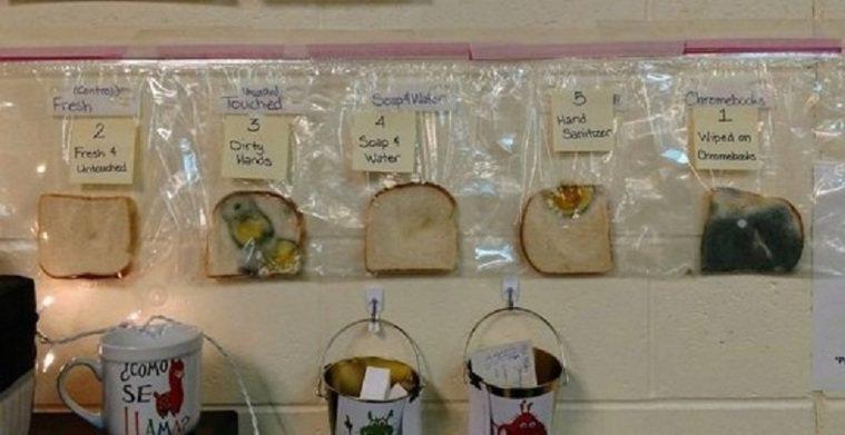 麵包實驗測試洗手多重要。圖取自sciencealert