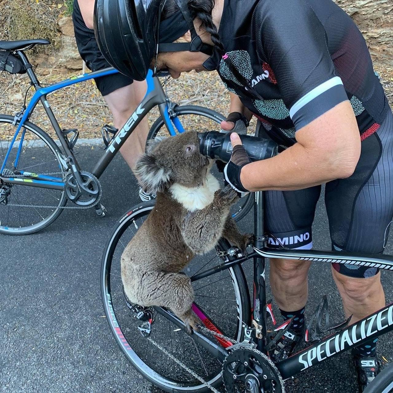 安娜拿出水壺讓樹熊飲水,樹熊即爬上單車喝水。 bikebug2019 FB圖片