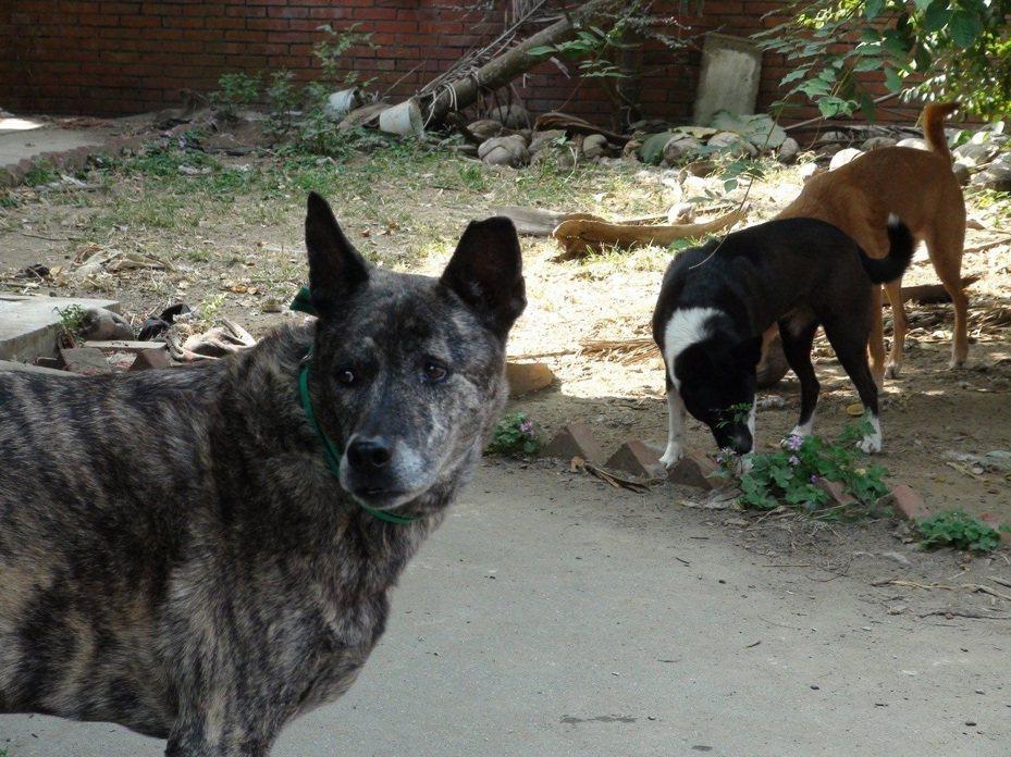 雲林縣今年3月起至12月15日擴大補助犬貓絕育活動,來管控犬貓繁殖源頭,以降低流浪犬貓數量,縣府指出明年將持續辦理絕育計畫。圖/本報資料照