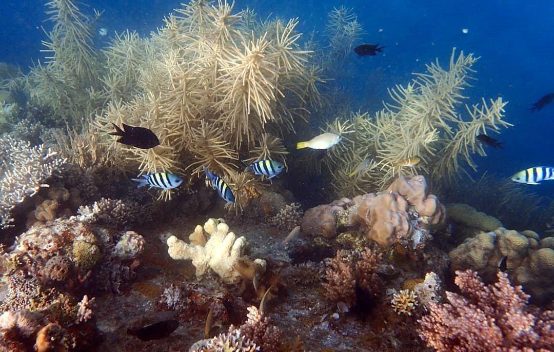 海底珊瑚花園。 圖/IG, the.christian.cee