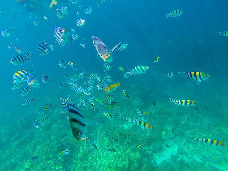 七子礁岩。 圖/Wikimedia
