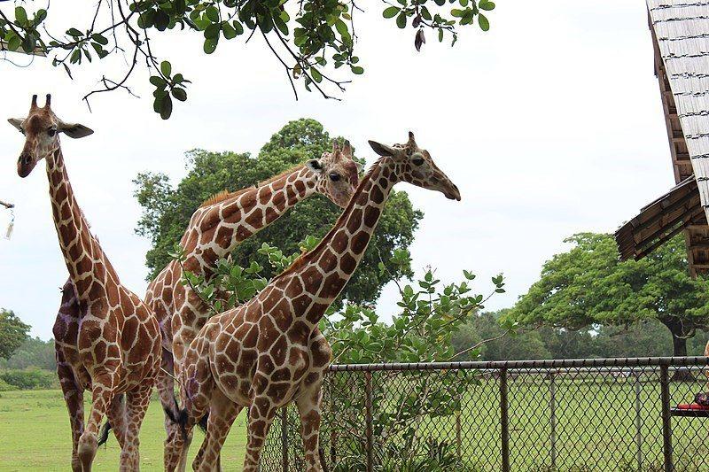 卡拉威特島野生動物保護區。 圖/Wikimedia