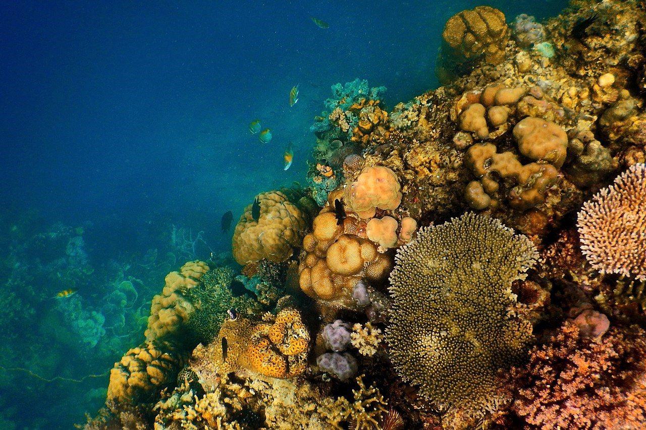 登山與潛水。 圖/Wikimedia