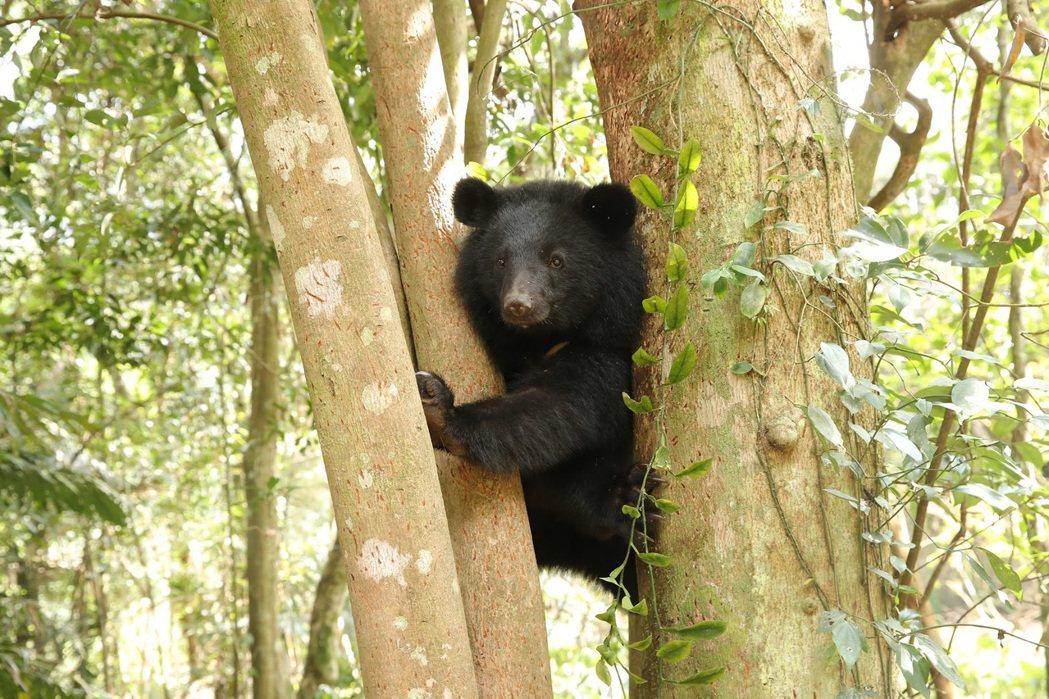 「黑熊來了」現正熱映中。圖/牽猴子提供