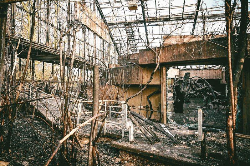 德國克雷菲爾德動物園的猿猴館燒毀,30多隻動物命喪火窟。 歐新社