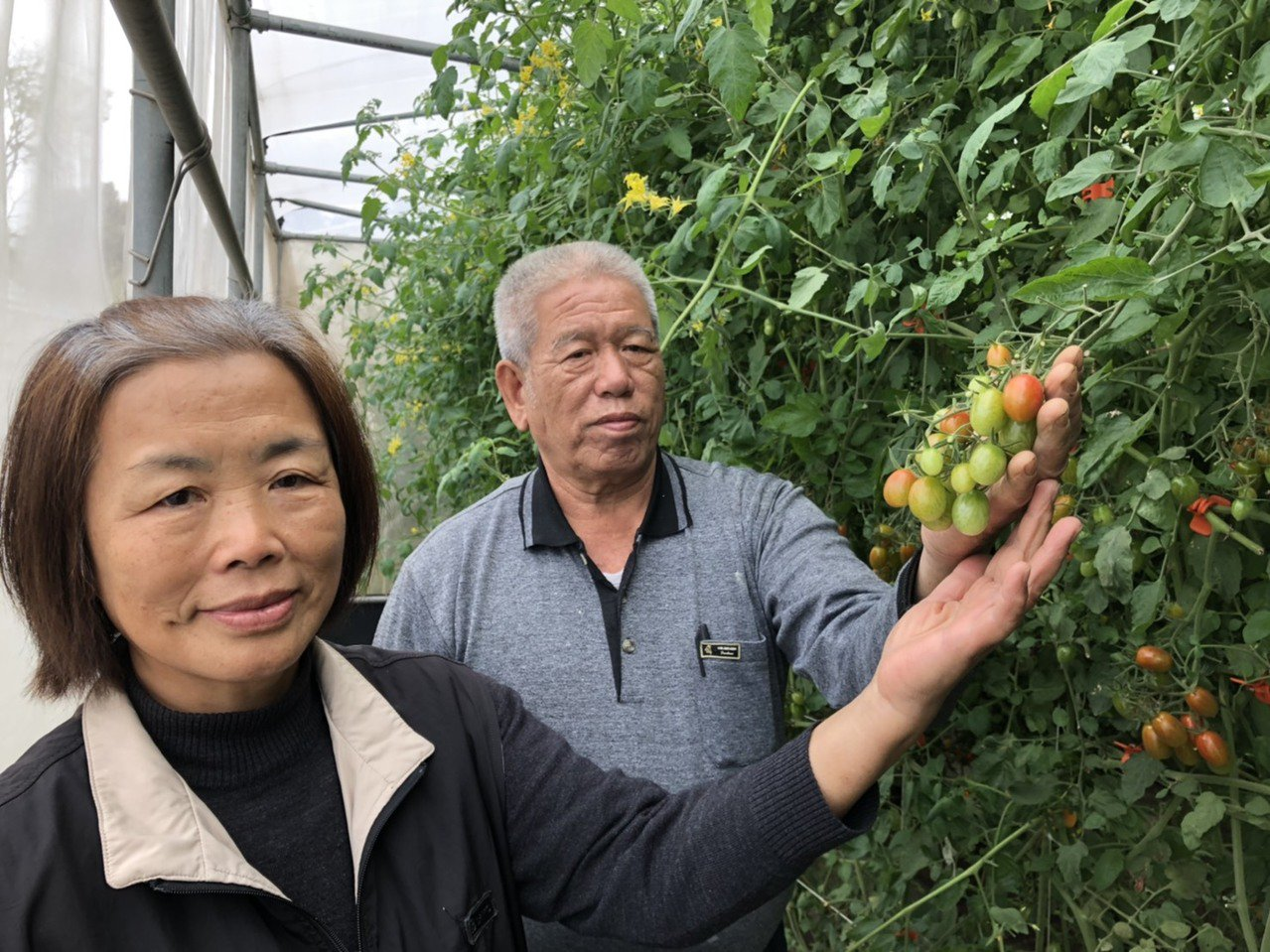 陳國富、許明麗夫婦攜手打造自己的「開心農場」,種出安全無毒的番茄、蔬果。 圖/蔡...