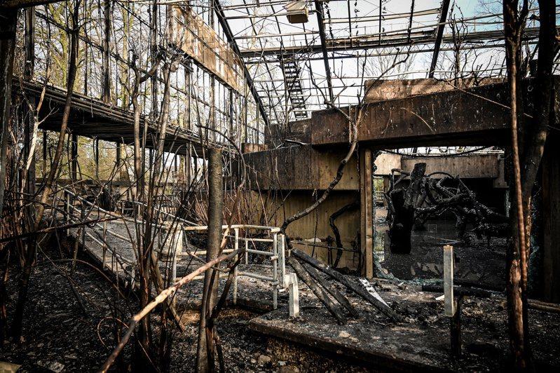 園內的猿猴館燒毀,30多隻動物命喪火窟。歐新社