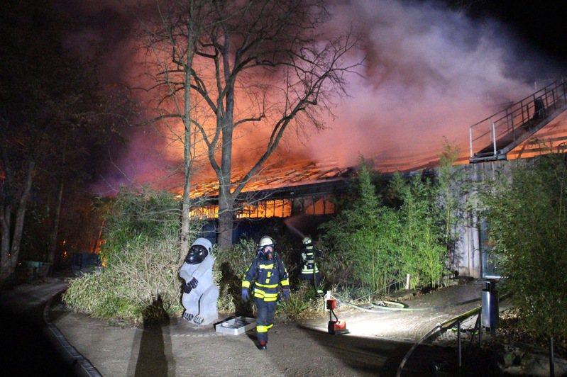 德國動物園失火。 美聯社