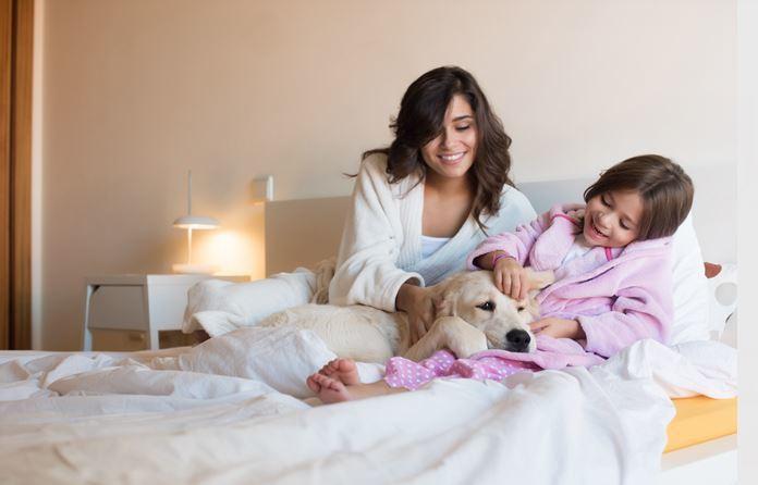 飯店提供狗狗陪睡服務。圖片來源/ingimage