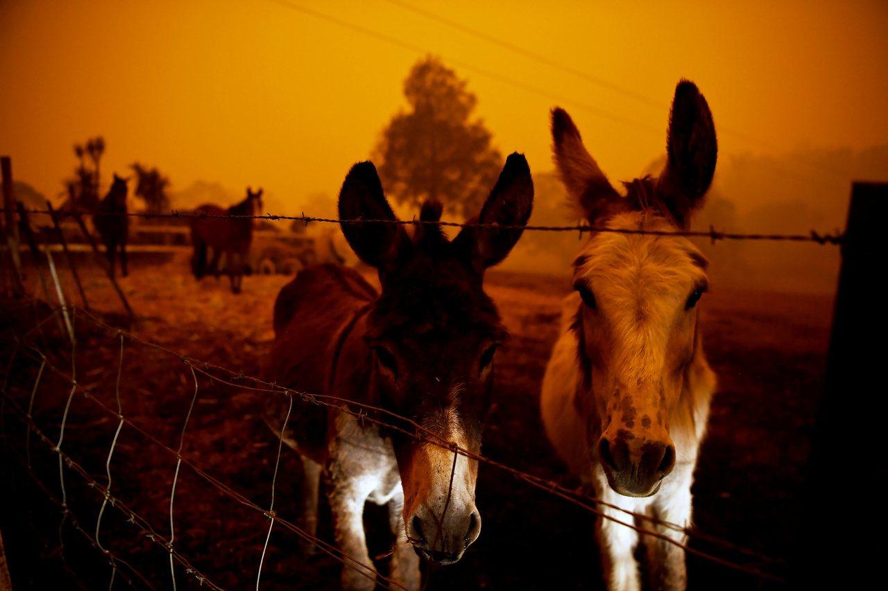 2019年中,亞馬遜熱帶雨林大火及澳洲大火,臺灣的環境污染以及動物保育方面議題需...