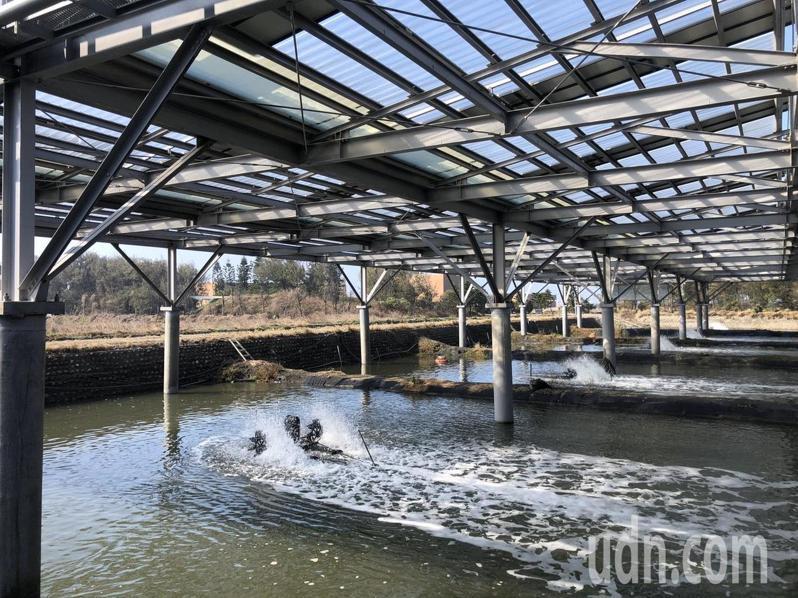 行政院農業委員會水產試驗所自106年進行漁電共生實驗。記者 許玉娟/攝影