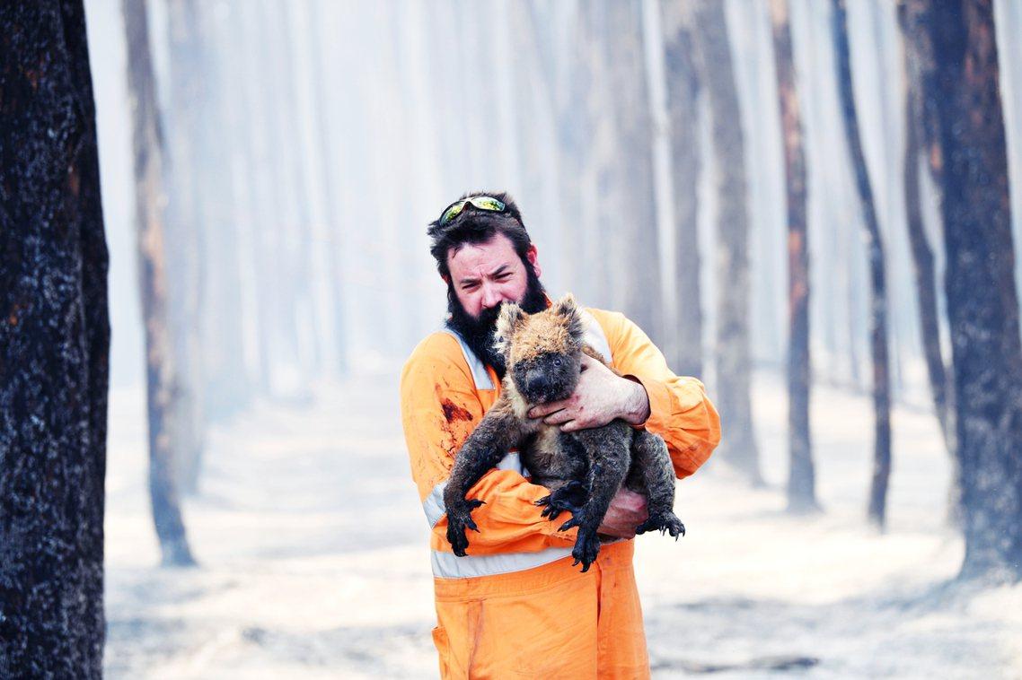 野生動物救援人員抱著在袋鼠島大火中倖存的無尾熊。 圖/歐新社
