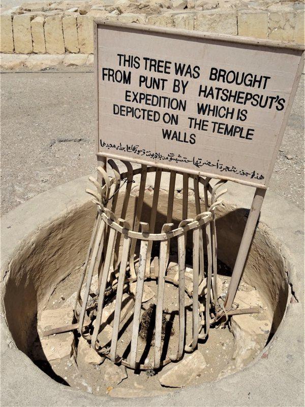 沒藥樹栽種遺址