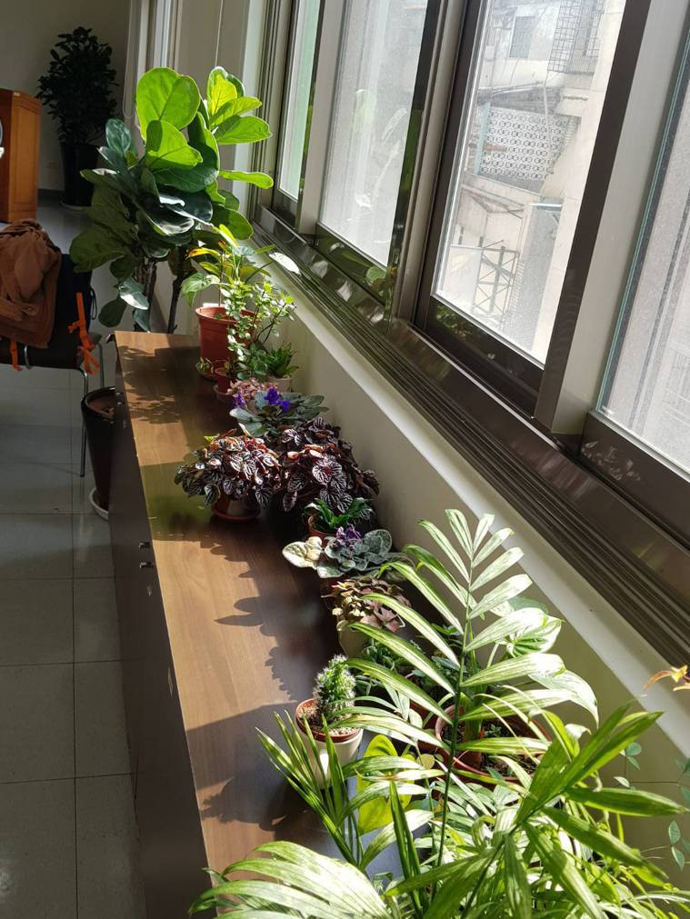 室內擺放盆栽,可有效淨化室內空氣。記者彭宣雅/攝影