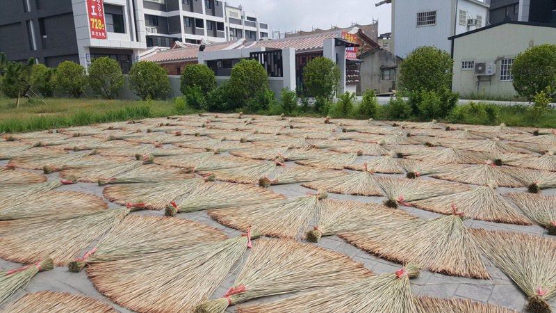 苗栗縣苑裡鎮被譽為藺草編織的原鄉,日曬中的三角藺草形成迷人的構圖。圖/聯合報系資料照片