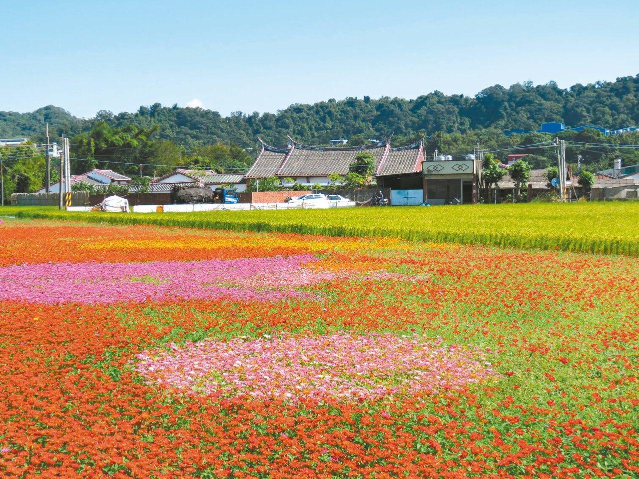 桃園花彩節運用農地休耕期間,規畫大面積花海和周邊農事體驗,已成桃園特色花卉活動。...