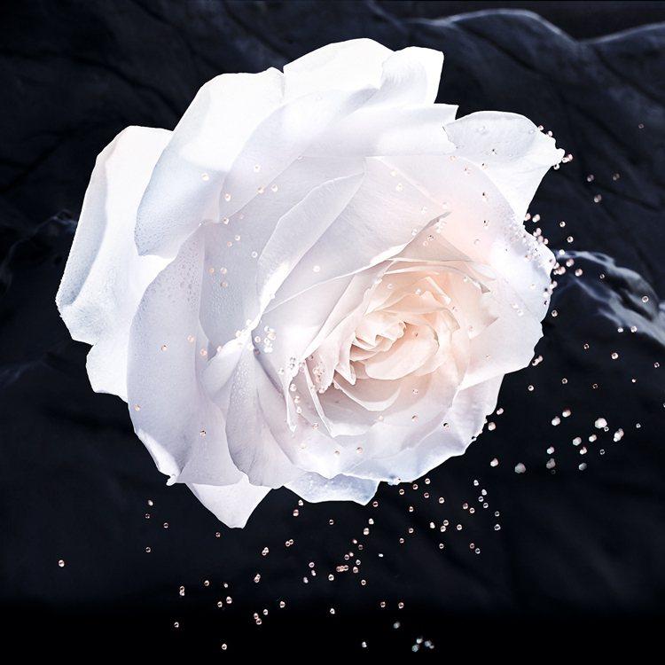 迪奧從「岡維拉玫瑰」中,萃取出肌膚所需要的微營養素。圖/迪奧提供