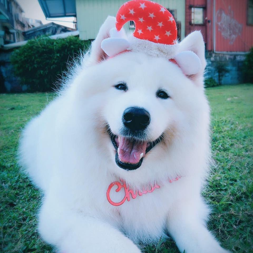 江俊翰的愛犬Emily愛美麗。圖/摘自臉書