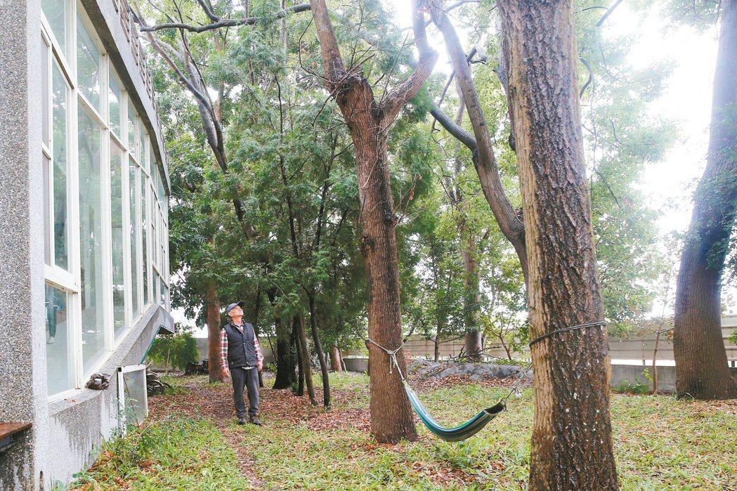 作家吳晟常在他住家旁的林子裡散步。 記者黃仲裕/攝影