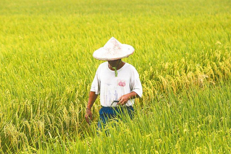 選舉年農委會加碼補貼與收購,排擠農業建設。 圖╱聯合報系資料照片