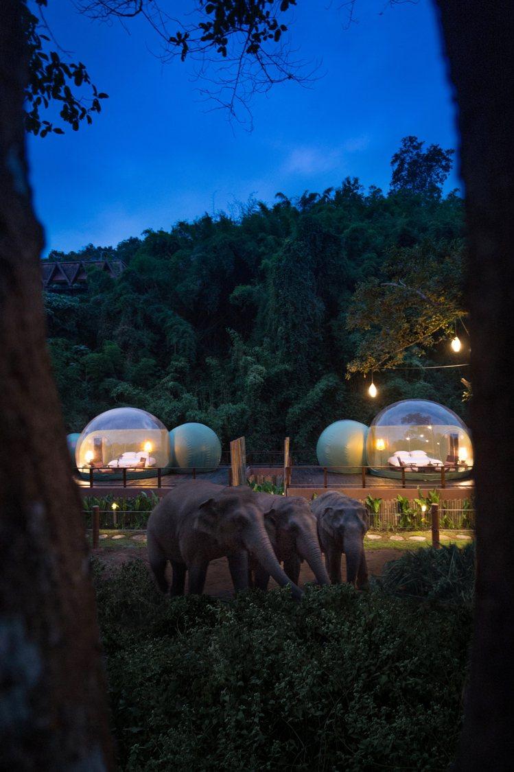入住酒店的旅客,也可以將「雨林泡泡」作為額外的活動預訂。圖/摘自酒店官網
