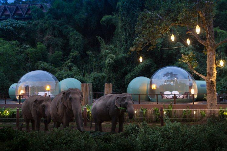 金三角象園安納塔拉度假酒店獨步全球的設計,在泰國大象自然棲息地中蓋出圓形透明的「...