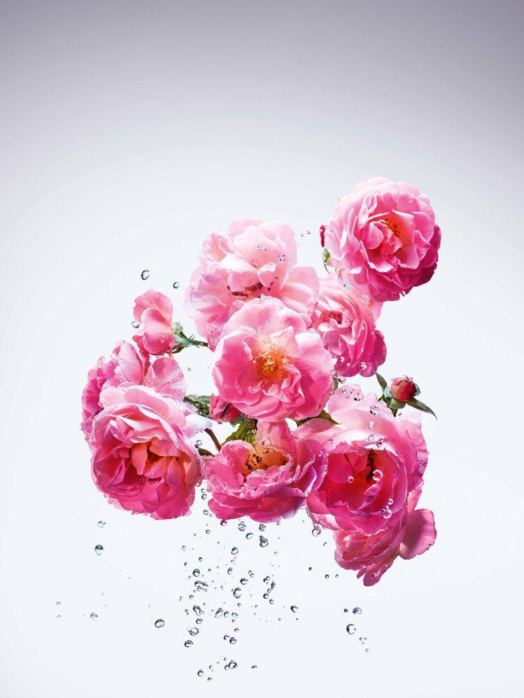 Miss Dior漫舞玫瑰淡香水結合兩款截然不同的玫瑰香氣。圖/迪奧提供