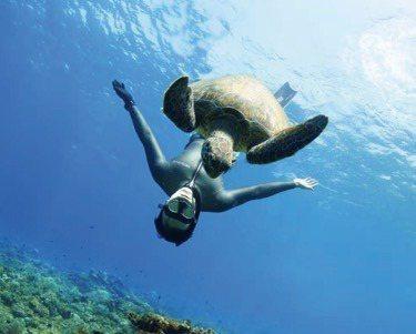 王陽明初次近距離接觸海洋生物時,坦言非常興奮。圖/經紀人David提供