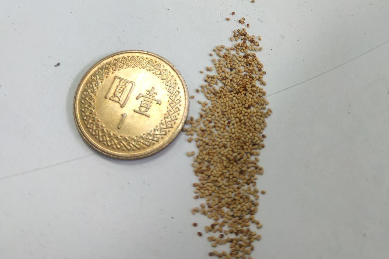家中桌牆上黏滿詭異「白芝麻」 網曝真相:一坨黃金