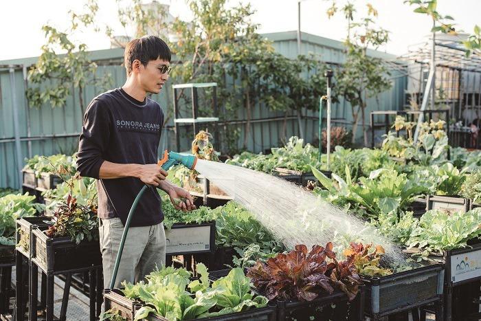 植下一座城市裡的屋頂農場