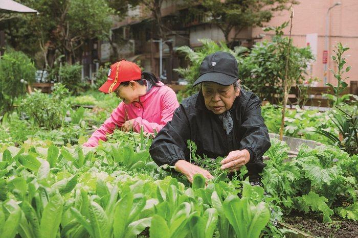 鵬程里的里民時常到快樂農園照料自己的作物。(攝影∕蔡耀徵)