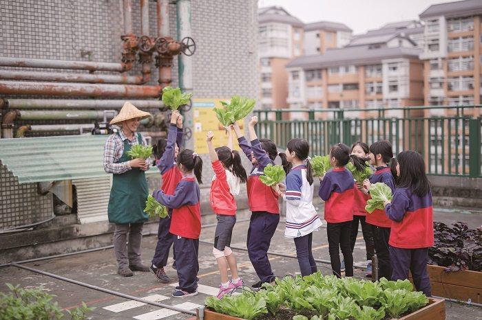 在校園屋頂打造小田園,帶領孩子理解務農至食農的每個環節。(攝影∕莊智淵)