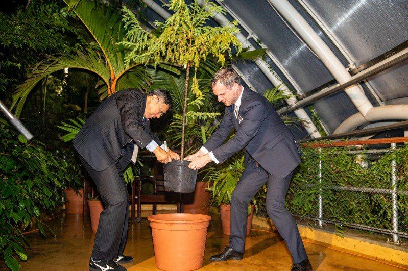 台北市長柯文哲與布拉格市長賀瑞普(Zdenek Hrib)雙方在台灣時間13日晚間9時許,於布拉格市政廳簽署姊妹市協定,雙方還一起種下名為「tajvánie kryptomeriovitá」(台灣杉)的小樹苗。圖/北市府提供