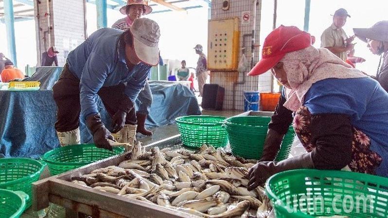 蚵子寮漁港的現撈水產品,遠近馳名。記者王昭月/攝影
