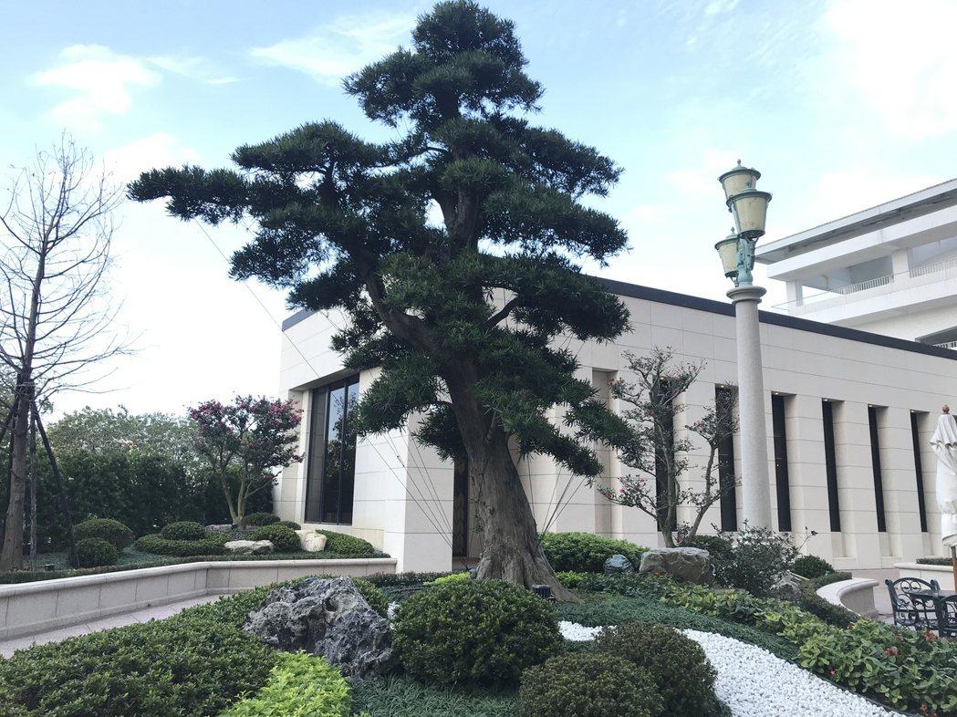 中悦美樹花園引進日本的羅漢松、黑松、茶花等老樹遍植於社區內,以打造「百年老樹御花...