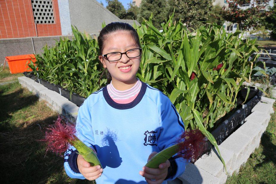 嘉義縣沿海偏鄉布袋鎮布袋國中在校園開發12處農地,由學生自行管理、栽種各類無毒蔬菜。圖/縣府提供