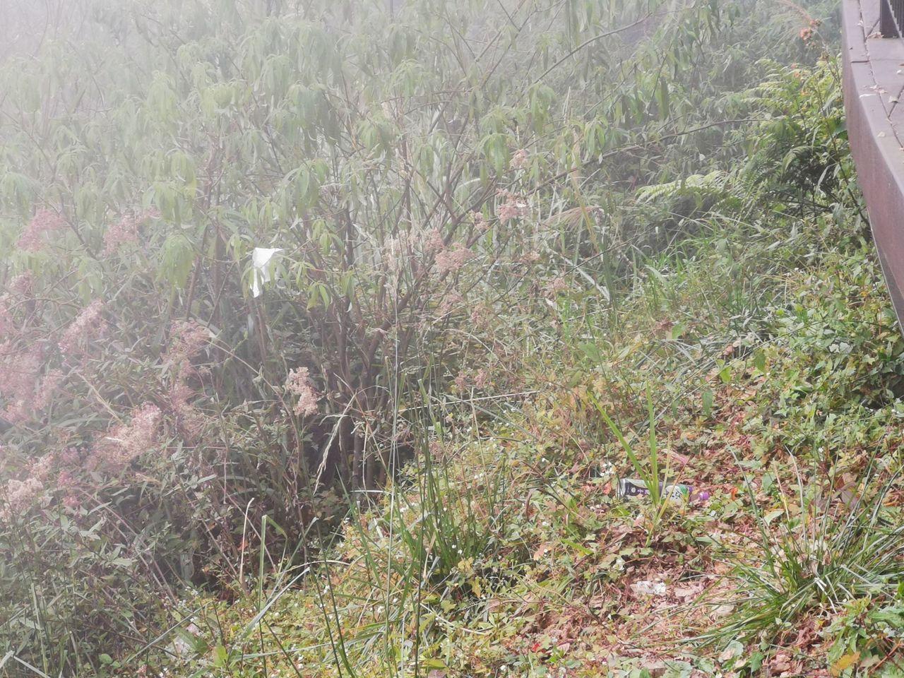 嘉義縣阿里山鄉台18線89.5公里觀景台於去年10月落成,因可看到日出及雲海,吸...