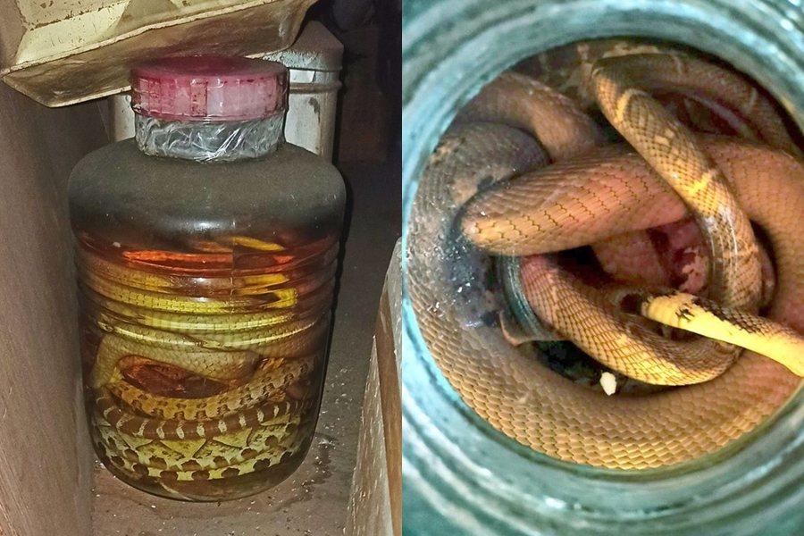 一名男網友在租屋處意外發現30年前的「蛇酒」。 圖片來源/FB社團「新竹大小事」