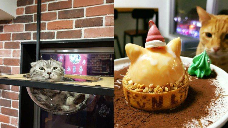 圖/擷自FunLife-Gelato。Cats。Cafe 粉絲專頁(女子學提供)