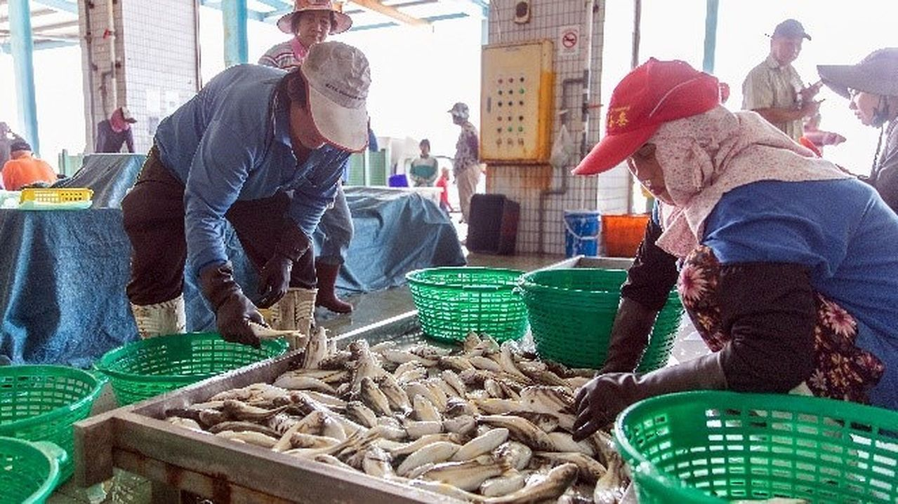 蚵子寮漁港的現撈水產品,遠近馳名。 圖/王昭月攝影