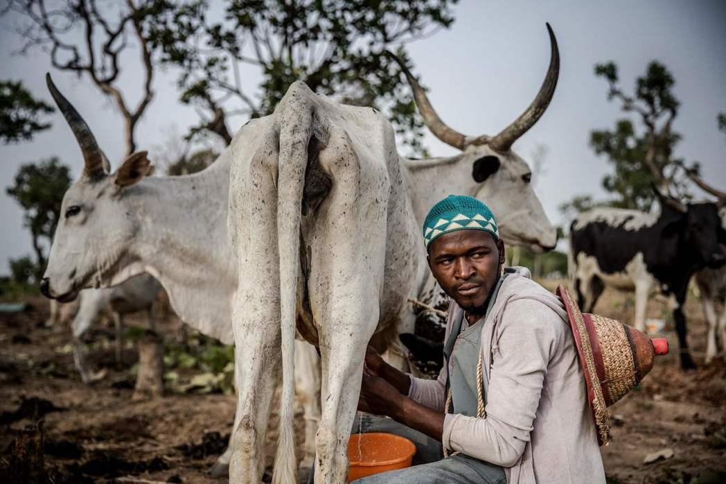 西非游牧的富拉尼人,與以農業維生的多貢人,長期因資源爭奪爆發血腥的農牧與族群衝突...