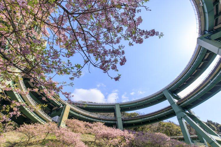 造型特殊的河津七瀧環狀橋配上櫻花,成為人氣賞櫻名所。圖/樂天旅遊提供