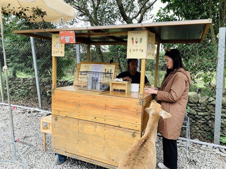 遊客可持門票兌換一份園區提供的胡蘿蔔條。記者張芳瑜/攝影