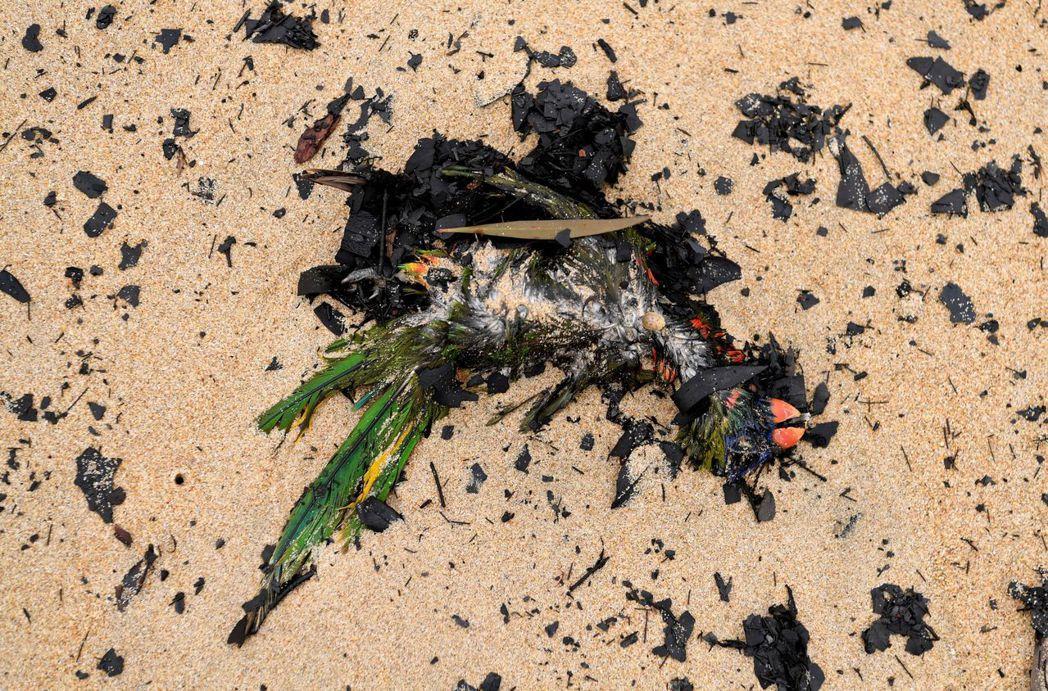 一隻澳洲原生種鳥類慘死野火之下,殘留的鳥喙和羽毛依稀可辨。 (路透)