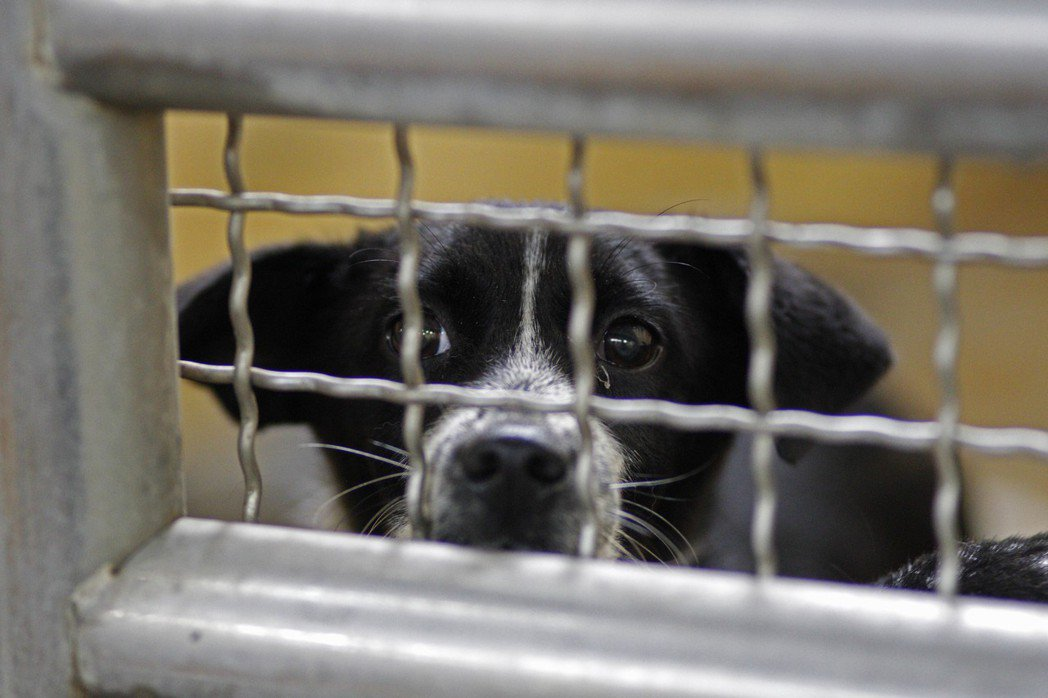 建立動物虐待認養黑名單,可能會牽涉到個資法。 圖/美聯社