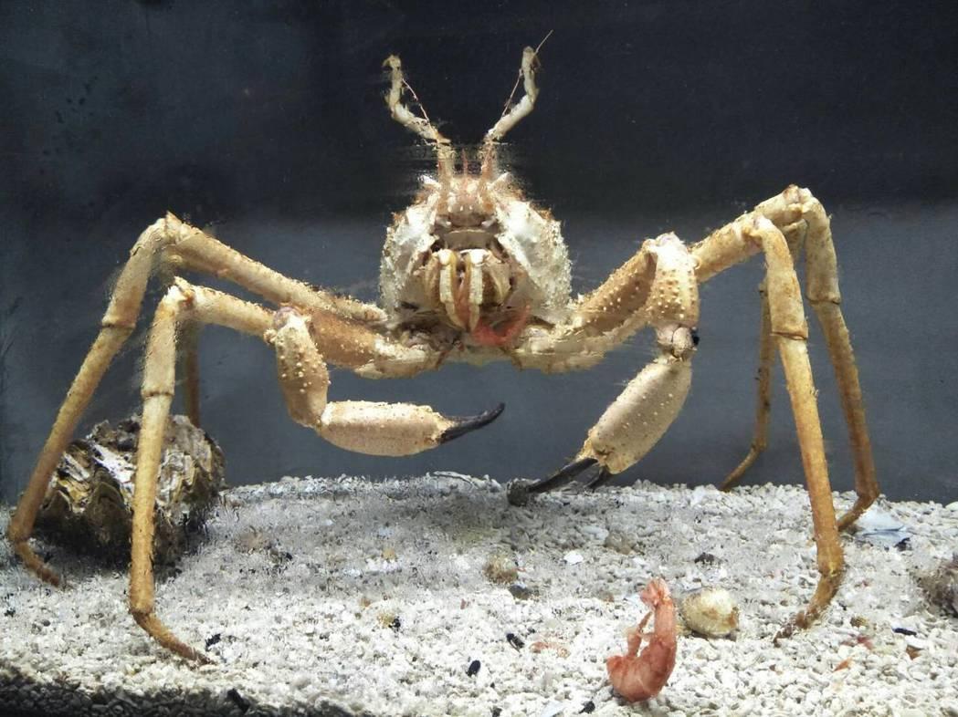 螃蟹博物館蒐集了台灣最稀有的海蟹和淡水蟹。 里山生態藝術文化園/提供